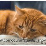 Como Curar la Gastritis en los Gatos
